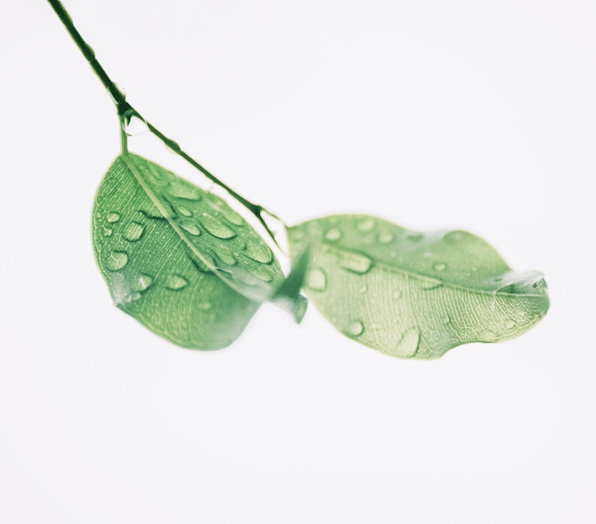 green-leaves-with-water-droplets
