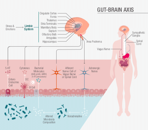 Gut Brain Axis