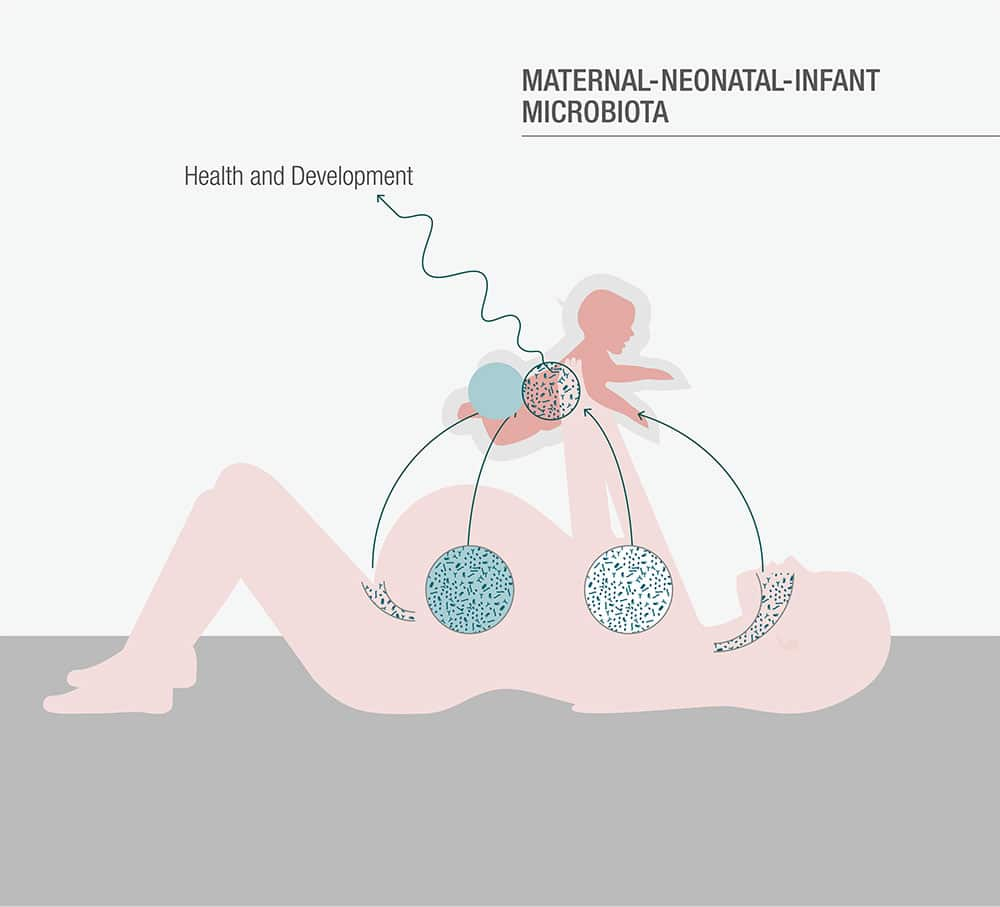 maternal neonatal infant microbiota