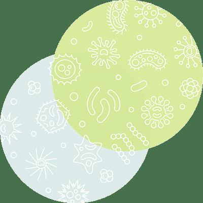 omnibiotic bacteria